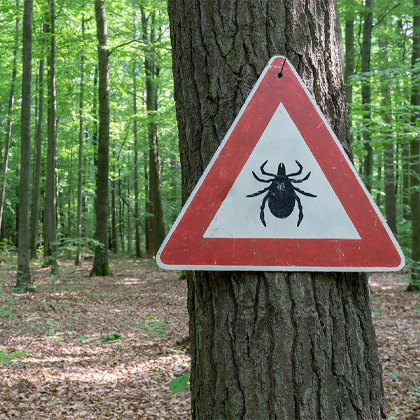 Lyme disease symptoms and prevention