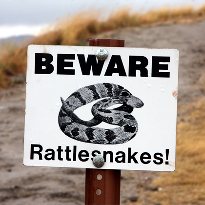Protect yourself against snakebites